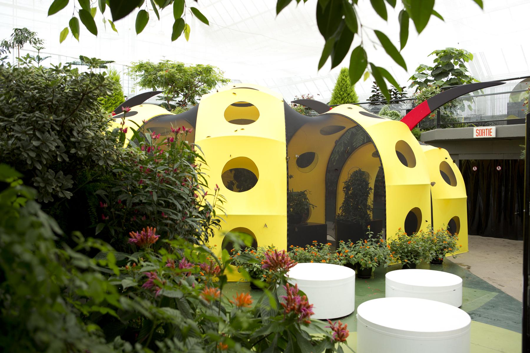 L insectarium de montr al espace pour la vie au jardin for Papillons jardin botanique 2016